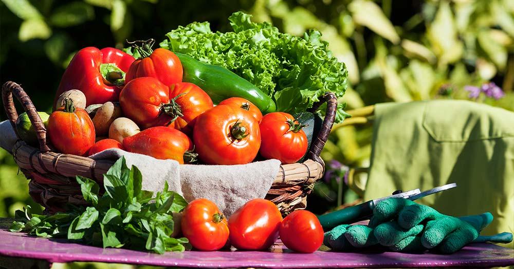 Thực phẩm hữu cơ (Organic) là gì?